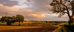 The rural landscape (Peter Leigh50) Tags: evening sunlight leicestershire landscape landschaft fujifilm fuji field farmland farm trees hedge track path footpath sky shadows xt2
