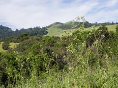 Windy Hill (Teelicht) Tags: california hügel kalifornien nordamerika northamerica sanmateocounty usa unitedstatesofamerica vereinigtestaaten windyhill hill portolavalley