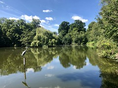 Canons Park Lake  (Explored) (Eleanor (New account))) Tags: scenery heron reflections canonsparklake edgware uk appleiphone8 august2019