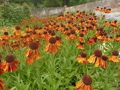8 August 2019 Stourhead (2) (togetherthroughlife) Tags: 2019 august wiltshire stourhead nationaltrust flower garden