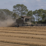 Combine Harvesters in South Cambridgeshire - August 2019