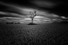 The General (Pete Rowbottom, Wigan, UK) Tags: dorset wheatfield longexposure blackandwhitelongexposure blackandwhite blacknwhite blackcloud nisifilters fotoprotripod uk england landscape fineart peterowbottom nikond810 lonetree tree field summer 2019 ndfilter light dramatic tarrant nikkor outside sky art bw flickr photography gnarlytree