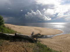 The Storm Is Coming (olaf_alien) Tags: latvia pabaži saulkrastunovads saulkrasti baltakapa storm tree dead beach dea sand clouds grass river olafalien olympus sp560uz stump