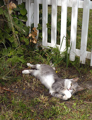 Playful (cats_in_blue) Tags: cat cats kitty palyful sønderho fanø