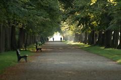 Jogger und Spaziergänger im NyP früh morgens (Bernd Götz) Tags: jogging nyphenburgerpark morgens spaziergänger