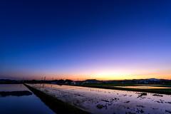 田園水鏡ーRural water mirror (kurumaebi) Tags: yamaguchi 秋穂 山口市 nikon d750 nature landscape sunset 夕陽 dusk 田んぼ reflection