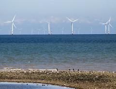 Coastal walk (Gill Stafford) Tags: gillstafford gillys image photograph wales northwales conwy rhosonsea penrhynbay coastal path sea cormorants windfarm turbines wind power electricity