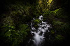 Fairy Falls Cascades (Longleaf.Photography) Tags: fairy falls cascades river brook stream creek or oregon columbia gorge moss flowers sunlight trail hiking