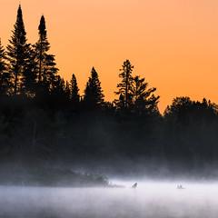 Spruce sunrise (Jerzy Orzechowski) Tags: trees sunrise silhuette mist landscape water canada lake algonquin orange fog