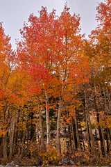 Autumn splendor (AgarwalArun) Tags: sony a7m2 sonyilce7m2 landscape scenic nature views easternsierra bishopca bishopcreek lakes leaves autumn fallfoliage mountains inyonationalforest