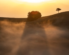 Eos (Cristiano Pelagracci) Tags: sunrise sun fog alba nature landscape paesaggio shadows tree albero orange sole