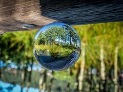 Trees in the Lensball 2 (oldhiker111) Tags: lensball laketahoe green aspens trees