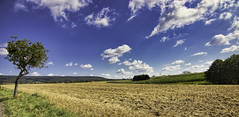 Field is done (brotfresser.de) Tags: auetal field clouds sunlight yellow blue sky tree green canon eos 80d atx 1120 f28 pro dx landscape summer luminar 11mm tokina germany niedersachsen deutschland norddeutschland lowersaxony schaumburg shg