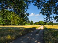 Laarder Engh (http://www.paradoxdesign.nl) Tags: laarder engh natuurmonumenten gooi het hilversum field wheat wheatfield shadow trees road country rural scenery summer day dirtroad