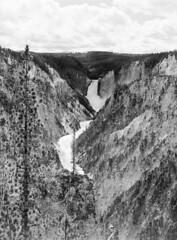 The Grand Canyon of Yellowstone (LarsHolte) Tags: pentax 645 pentax645 645n 6x45 smcpentaxfa 75mm f28 120 film 120film analog analogue kosmo foto mono 100iso caffenolc mediumformat blackandwhite classicblackwhite bw monochrome filmforever filmphotography ishootfilm larsholte homeprocessing usa yellowstone nationalpark wyoming landscape river waterfall