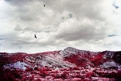 The American West (Doug Golupski) Tags: fpp filmphotographyproject film colorinfrared colorir e6 eir aerochrome analog fujigw690iii kodak infrared ir landscape