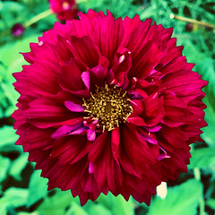 spontaneous welcome (77ahavah77) Tags: bloom flower blossom red maine