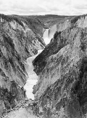 The Grand Canyon of Yellowstone (LarsHolte) Tags: blackandwhite bw 120 film monochrome analog mediumformat mono 645 foto pentax ishootfilm 120film analogue 6x45 f28 kosmo 100iso 75mm pentax645 filmphotography classicblackwhite 645n caffenolc filmforever smcpentaxfa larsholte usa river landscape nationalpark yellowstone wyoming homeprocessing waterfall