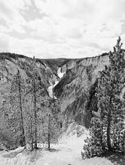The Grand Canyon of Yellowstone (LarsHolte) Tags: pentax 645 pentax645 645n 6x45 smcpentaxa 35mm f35 120 film 120film analog analogue kosmo foto mono 100iso caffenolc mediumformat blackandwhite classicblackwhite bw monochrome filmforever filmphotography ishootfilm larsholte homeprocessing usa yellowstone nationalpark wyoming landscape river waterfall