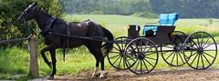 Amish Horse and Buggy (ghostlyfour2) Tags: amish mercercounty pennsylvania mercercountypennsylvania nature horse buggy fujifilm xt3