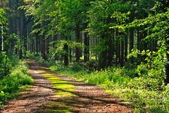 Relaxing Evening Walk - Entspannte Abendrunde (her035) Tags: waldweg wald forest nrw niederrhein kreiskleve abend evening goldenestunde goldenhour wandern hiking spring frühling