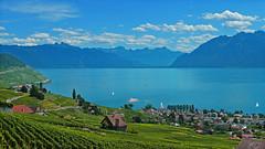 SWITZERLAND - Leman lake and Lavaux vineyard (Jacques Rollet (Little Available)) Tags: suisse switzerland leman léman lake lac paysage landscape alpes alps mountain montagne vineyard lavaux vignoble cully village groupenuagesetciel