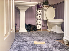 Cool Spot IMG_0431-Edit (Laurie2123) Tags: laurieabbotthartphotography laurieturner laurieturnerphotography laurietakespics maggie odc odc2019 ourdailychallenge scottishterrier bathroom bone laurie2123 scottie