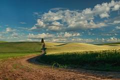 Simple Life (Beve Brown-Clark) Tags: palouse thepalouse wheatcountry wheat farmland washington summer farmlife dirtroads backroads morning crops sewashington solitude ©bevebownclark
