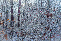 dreams of winter (marinachi) Tags: winter freezingrain frost frozen ice cold white forest trees twigs sundaylights usa