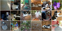homestay gokarna 1 (belight7) Tags: south india special place jungle cats garden dogs hosts shanti collage mosaic