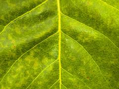Leaf texture (Raoul Pop) Tags: autumn fallfoliage home medias time transilvania