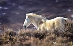 Elganza (Aspenbreeze) Tags: mare wildmare mustang wildhorse horse whitehorse equine mane tail runninghorse nature rural coloradowildlife wildlife beverlyzuerlein aspenbreeze moonandbackphotography