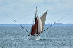 Voilier à 2 mâts « BICHE » à l'entrée du Golfe du Morbihan (Port Navalo) (ijmd) Tags: france morbihan golfedumorbihan presquîlederhuys bateau boat portnavalo