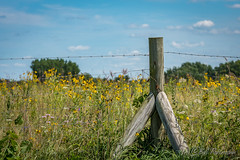 20190809-DSC_9383.jpg (GrandView Virtual, LLC - Bill Pohlmann) Tags: post belwinconservancy landscape wildflowers aftonmn fencepost barbedwirefence prairie minnesota