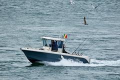 A la pêche à l'entrée du Golfe du Morbihan (Port Navalo) (ijmd) Tags: france morbihan golfedumorbihan presquîlederhuys bateau boat portnavalo