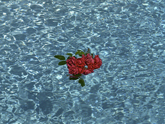 Illusions of Love   (MF Pro400H) (Harald Philipp) Tags: roses swimmingpool contax 645 mediumformat zeiss sonnar fujifilm pro400h