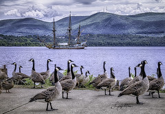 Geese and Galley On Hudson (jsleighton) Tags: newburgh ny geese hudson river waterfront galley mountains landscape sky ducks birds beacon sailing ship