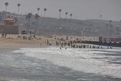 Playa del Rey, Beach, CA CQ4A9151 (Hart Walter) Tags: ballonajetty willet surfbird redneckedphalarope terns eleganttern royaltern caspiantern sanderling blackturnstone playadelrey beach heermannsgull marbledgodwit