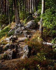 ElvenPathII (A.Koponen) Tags: ef70200mmf40l canon canonphotography nature naturephotography kuopio pictureskuopio finland suomi suomiphoto finnishphotography daylight summer summerphotography
