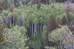 LaPlataCanyon_109 (allen ramlow) Tags: la plata canyon colorado landscape scenery nature scenic sony alpha a7iii