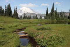 Mount Rianier (jlcummins) Tags: mountrainiernationalpark mountrainier nationalparks washingtonstate mountains cascademountains canonefs1585mmf3556isusmlens