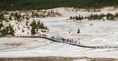 Yellowstone Walkway - Tiltshift (yorgasor) Tags: red yellowstone tiltshift hasselblad sony a7r2 a7rii