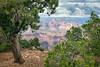 At the Edge (Kirk Lougheed) Tags: arizona coloradoplateau coloradoriver grandcanyon grandcanyonnationalpark juniperusosteosperma southrim usa unitedstates utahjuniper yavapaipoint canyon juniper landscape nationalpark outdoor park pine pinyon piñon rim river summer tree water