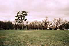 Gloom (OzGFK) Tags: 35mm ricoh ricoh35zf rolleivariochrome variochrome analog crossprocess crossprocessed film slidefilm urbannature winter xpro edinburghgardens eddygardens nature park