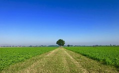 Iph8105 (gzammarchi) Tags: italia paesaggio natura pianura campagna ravenna borgomontone albero quercia strada sterrato