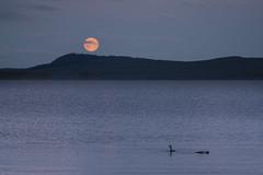 full moon (Diana Klawitter) Tags: voomond vollmondaufgang vilhelmina schweden vildmarksvägen sonyflickraward