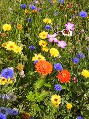 Orange DSCN3155 (ianpreston) Tags: 2019 nationaltrust ticknall derbyshire calkeabbey flowers