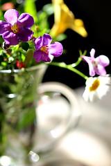 A posy for the table (Peter Denton) Tags: macro flowers sigma105mm ©peterdenton canoneos100d petunia bacopaabunda spanishdaisy mexicanfleabane