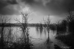 Deadlands (Through_Urizen) Tags: category hdr inegol karadere landscape longexposure places turkey canon canon70d canon1585mm outdoor outside nature trees deadtrees branches figures blackandwhite mono monochrome bw whiteandblack grey moody reflections dark lake reservoir water
