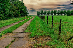 Road To Distance (Alfred Grupstra) Tags: nature ruralscene outdoors tree road landscape grass farm agriculture summer field greencolor scenics footpath land meadow forest nonurbanscene hill plant